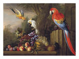Parrots Of Paradise Premium Giclee Print by Jacob Bogdani