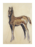 The Foal Premium Giclee Print by Philip Blacker