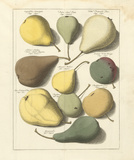 Orchard Pears I Premium Giclee Print by A. Poiteau