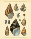 Shells II Premium Giclee Print by Maria Mendez