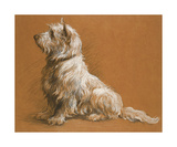 Drawing Of A West Highland Terrier Premium Giclee Print by Herbert Dicksee