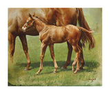 Foal and Mother Premium Giclee Print by Susan Crawford