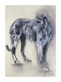 Irish Wolfhound Premium Giclee Print by Philip Blacker