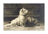 Scotties Premium Giclee Print by Herbert Dicksee