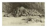 Tiger Resting Premium Giclee Print by Herbert Dicksee