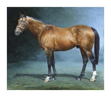 Danehill Premium Giclee Print by Susan Crawford