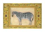 Zebra Premium Giclee Print by Ustad Mansur