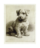 Puppy Premium Giclee Print by Herbert Dicksee
