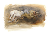Whippets Running Premium Giclee Print by Susan Crawford