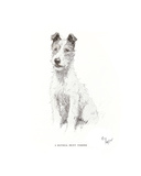 Meynell Hunt Terrier Premium Giclee Print by Cecil Aldin