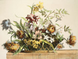 Basket Of Flowers II Premium Giclee Print by Jerome Baptiste