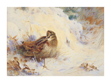 Woodcock in the Snow Premium Giclee Print by Archibald Thorburn