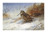 Winter Woodcocks Premium Giclee Print by Archibald Thorburn