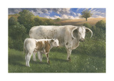 Longhorn Cow And Calf Premium Giclee Print by James Lynch