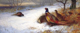 Pheasants and Hens in Snow Premium Giclee Print by Archibald Thorburn