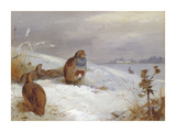 Partridges and Hare Premium Giclee Print by Archibald Thorburn