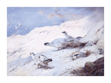 Woodcock in a Snowy Highland Premium Giclee Print by Archibald Thorburn