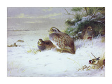 Partridges and Goldfinches in Winter Premium Giclee Print by Archibald Thorburn