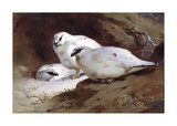 Ptarmigan in Winter Woodland Premium Giclee Print by Archibald Thorburn