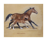 Hasili with Foal Premium Giclee Print by Susan Crawford