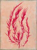 Coral Island III Premium Giclee Print by Maria Mendez