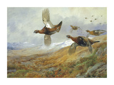 Grouse in Flight Premium Giclee Print by Archibald Thorburn