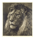 Lion Premium Giclee Print by Herbert Dicksee