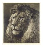 Lion Premium Giclee Print by Herbert Dicksee