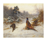 Cock and Hen Pheasants in Winter Premium Giclee Print by Archibald Thorburn