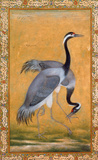 Two Cranes Premium Giclee Print by Ustad Mansur