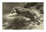 Startled Premium Giclee Print by Herbert Dicksee