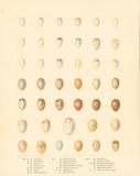 Oology X Premium Giclee Print by A. Poiteau