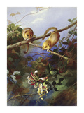 Mice and Honeysuckle Premium Giclee Print by Archibald Thorburn