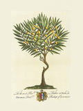 The Lord Bishop Of London Botanical Premium Giclee Print by Georg Ehret
