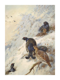 Cock and Hen Black Grouse Reproduction procédé giclée Premium par Archibald Thorburn