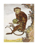 Monkey III Premium Giclee Print by Jacques de Seve