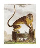 Monkey IV Premium Giclee Print by Jacques de Seve