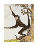 Monkey II Premium Giclee Print by Jacques de Seve