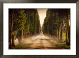 Cypress Lined Road II, Siena Tuscany Posters by Jimmy Williams