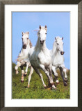 Trois chevaux au galop|Three Running Posters par Bob Langrish