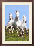 Trois chevaux au galop|Three Running Poster par Bob Langrish