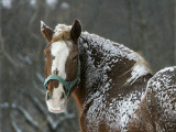 Workhorse Braves the Snow and Falling Temperatures at a Farm in Bainbridge Township, Ohio Photographic Print
