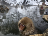 Japanese Macaques Soak in a Hot Spring Pool at Jigokudani Monkey Park in the Mountains Photographic Print
