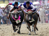 Jockeys Race in the 133 Rd Annual Traditional Water Buffalo Race in Chonburi Province, Thailand Photographic Print