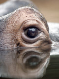 Eye of Hippo at Season Opening of Zoom Erlebniswelt Adventure Park in Gelsenkirchen, Germany Photographic Print