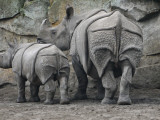 Rhinoceros and Her Youngster Hang Out in their Outdoor Enclosure at the Tierpark in Berlin Impresso fotogrfica