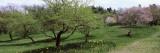 Trees in a Garden, Ellwanger Garden, Rochester, Monroe County, New York State, USA Fotoprint van Panoramic Images,