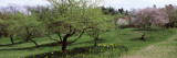 Trees in a Garden, Ellwanger Garden, Rochester, Monroe County, New York State, USA Photographic Print by  Panoramic Images