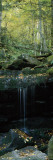 Waterfall in a Forest, Great Smoky Mountains National Park, North Carolina, USA Photographic Print by  Panoramic Images