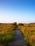 Walkway on the Fenor Bog, County Waterford, Ireland Photographic Print